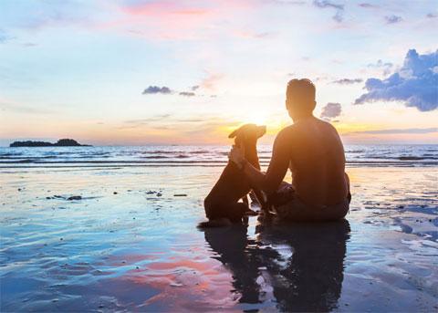 Mit dem Hund nach Dänemark - Strand
